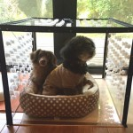 Dogs love to stay in their Air Torce B cage.